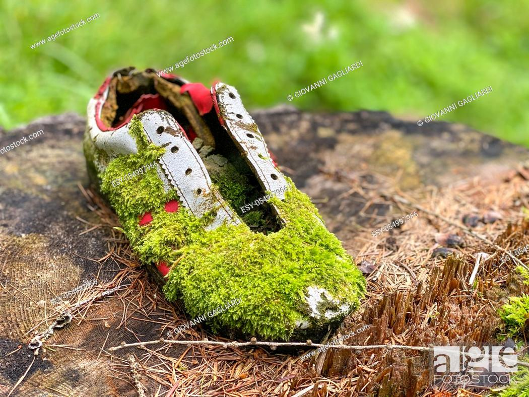 Stock Photo: Abandoned sport shoe on a forest tree trunk.