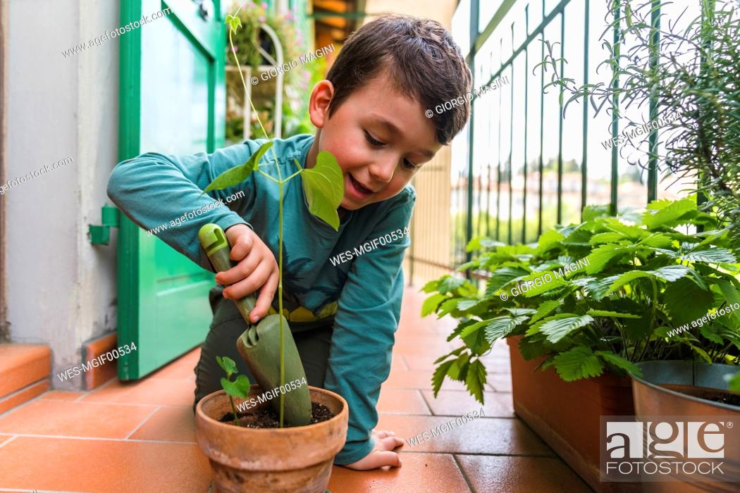 Stock Photo: Little boy gardening on balcony.