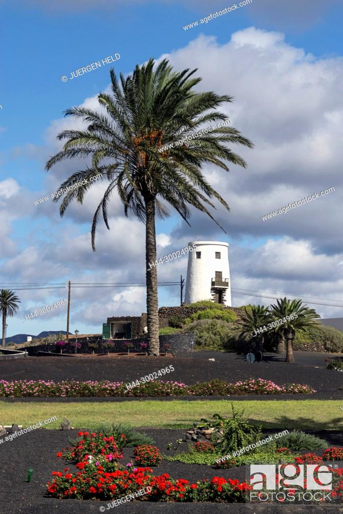 Stock Photo: Windmill at roundabout in Uga, Palm Trees, Lanzarote, Canary Islands, Spain.