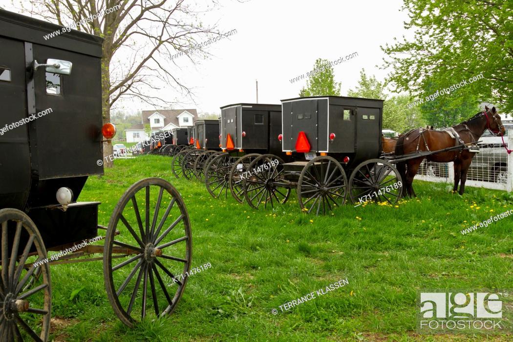 Stock Photo: Many Amish horse and buggies in a pasture near Shipshewana, Indiana, USA.