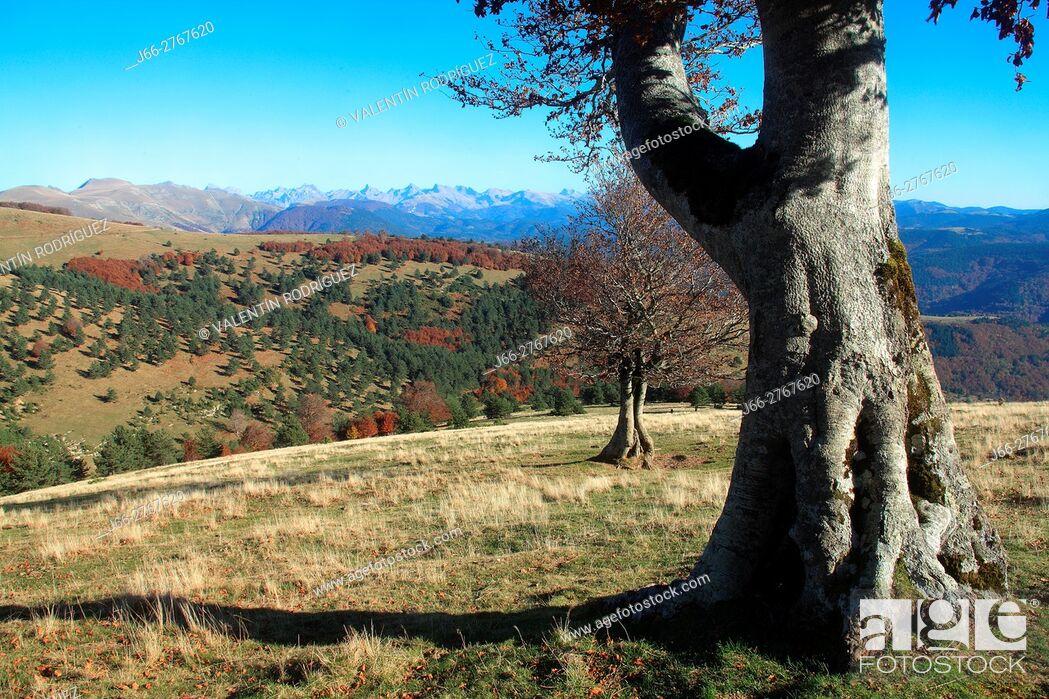 Imagen: Landscape in the Sierra de Abodi. Ochagavía. Salazar valley. Navarra.