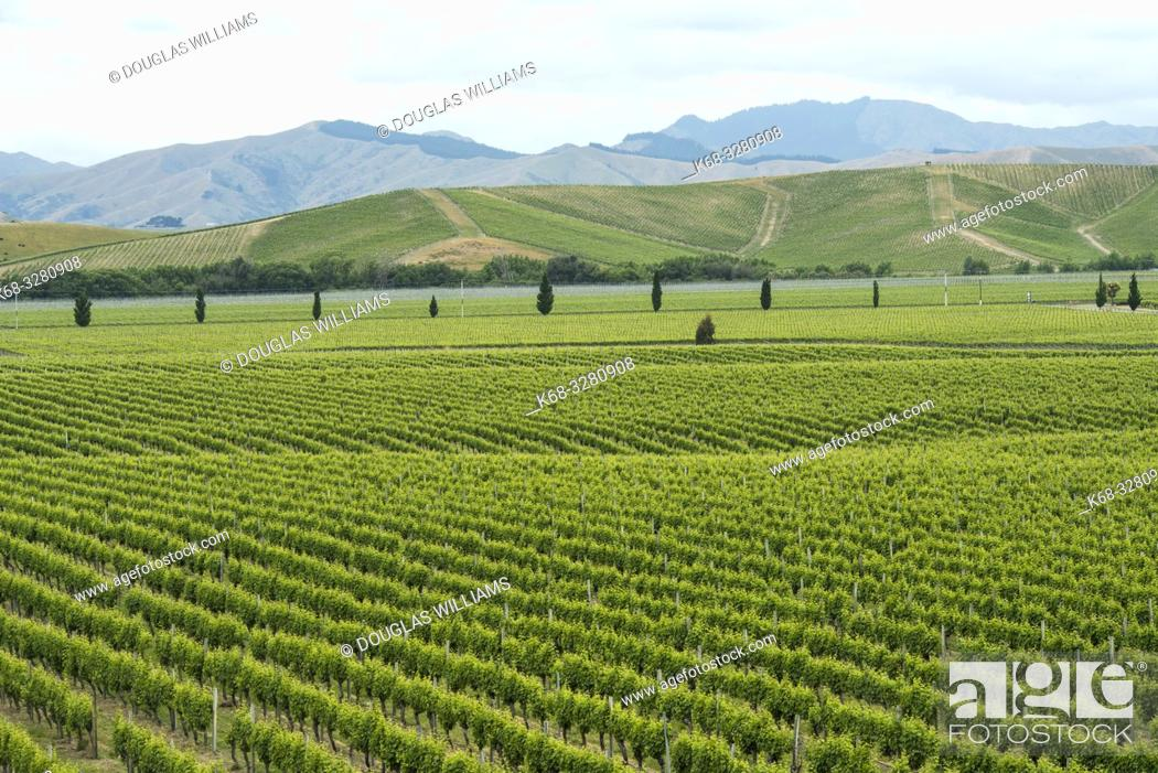 Imagen: The Brancott Estate Winery in the Marlborough region near Blenheim, on the south island of New Zealand.