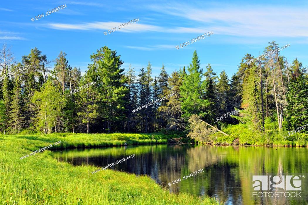 Stock Photo: Seney wetlands in early summer, Seney NWR, Seney, USA.