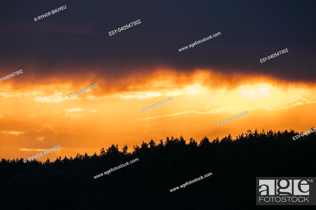 Stock Photo: Rain Cloud Above Dark Black Silhouettes Of Forest Trees Woods During Beautiful Vibrant Sunset Sunrise. Natural Colors Of Evening Sky.