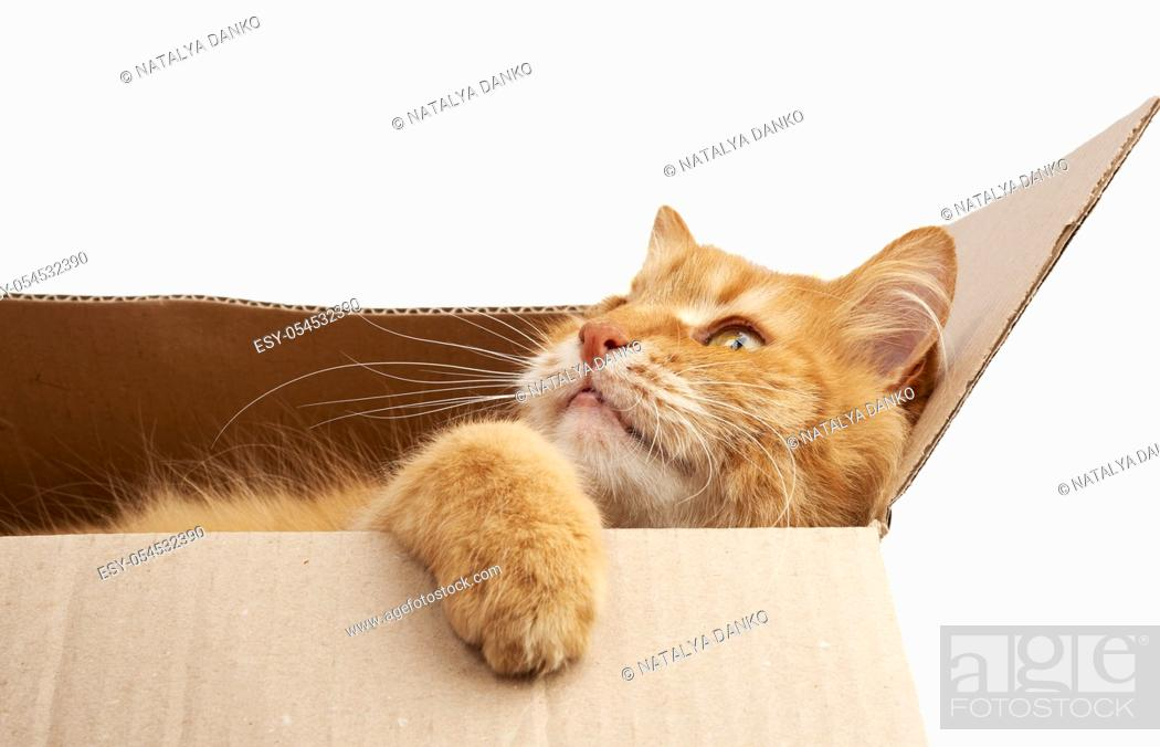 Stock Photo: adult ginger cat resting in a brown cardboard box, looking to the side.