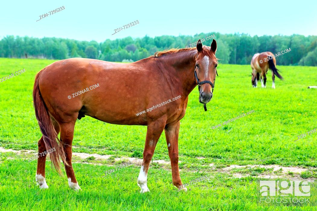 Imagen: Beautiful horses on the background of the forest landscape photographed close up.