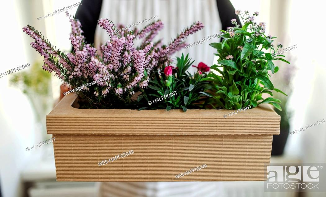 Stock Photo: Close-up of woman holding flowers in a cardboard box.