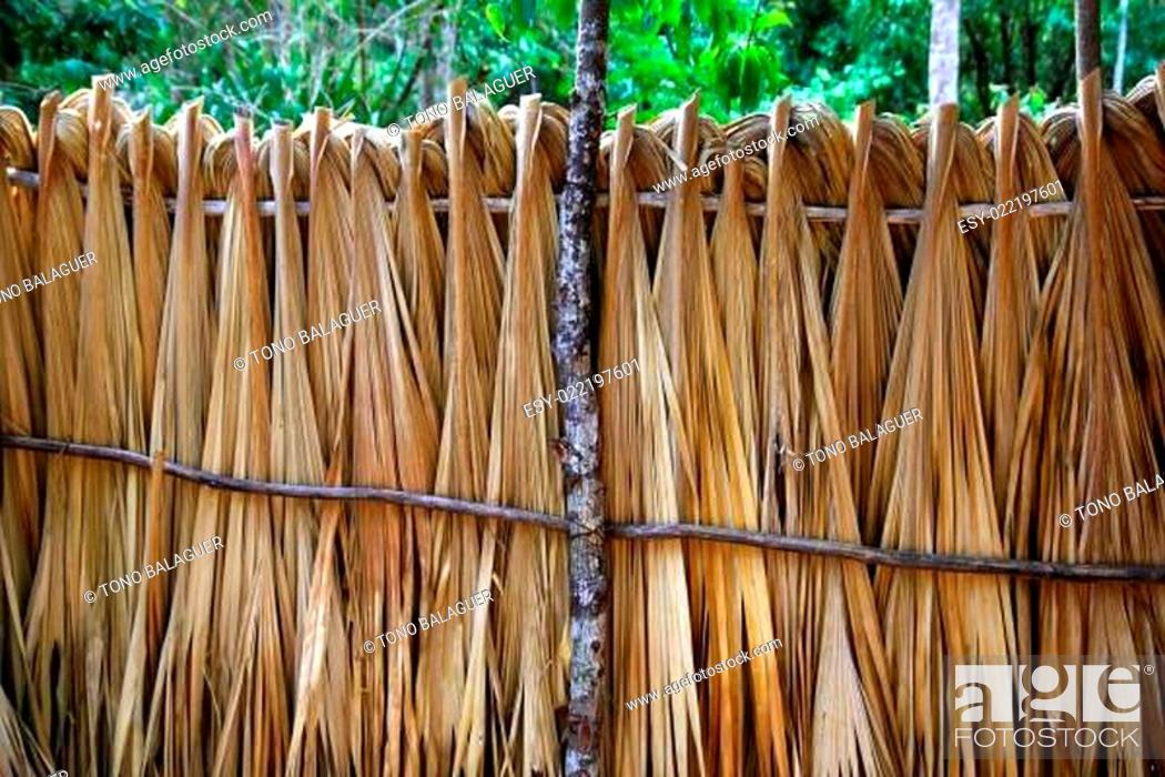 Stock Photo: Mayan palm tree leaves wood fence in rainforest.