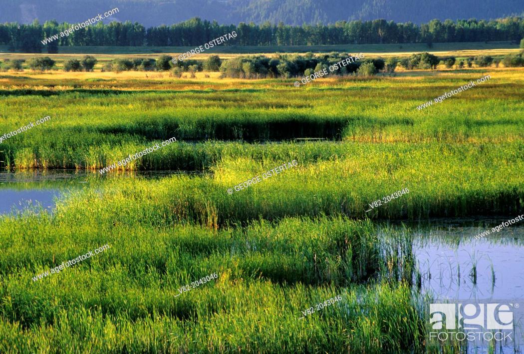 Stock Photo: Marsh from Tour Road, Kootenai National Wildlife Refuge, Idaho.