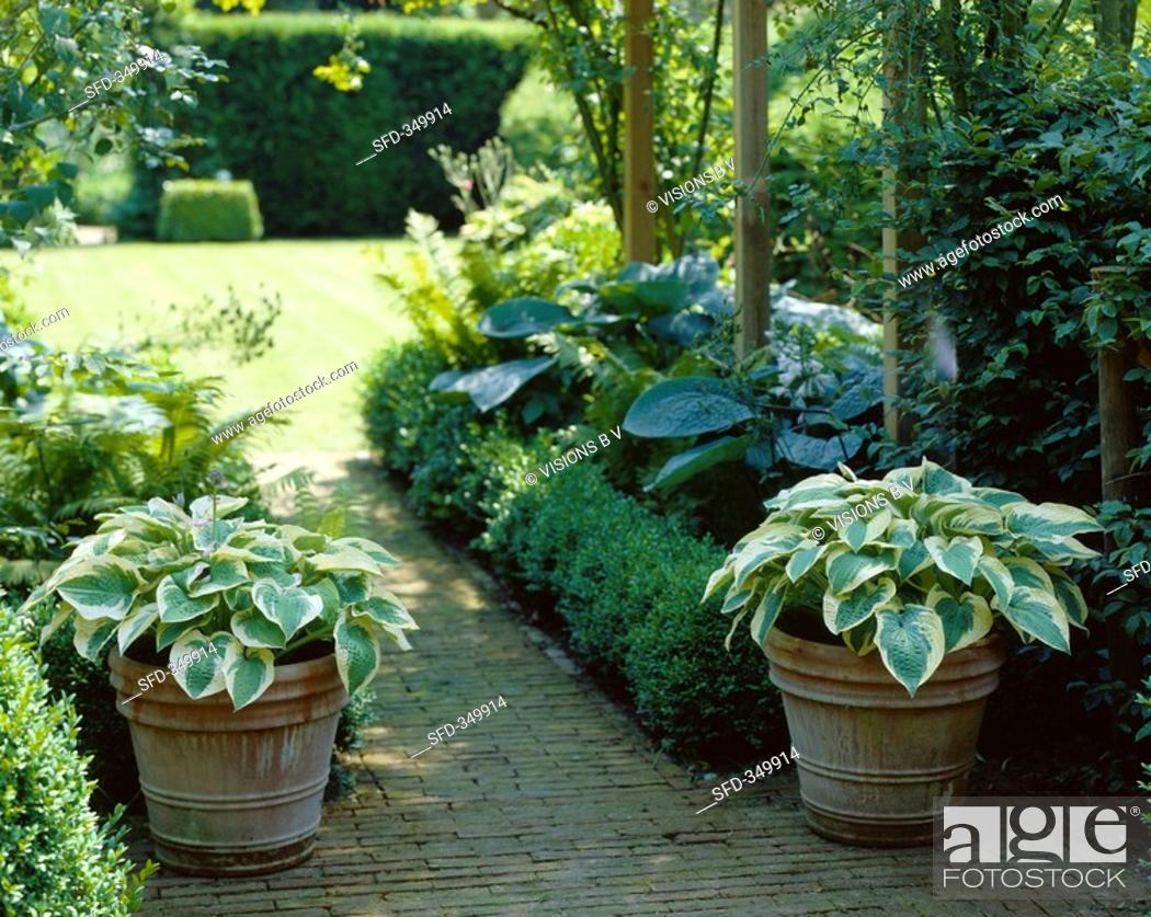 Garden With Hostas In Pots Stock Photo Picture And Rights Managed