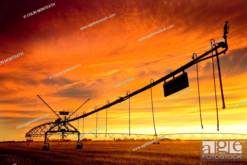 Stock Photo: Mobile irrigation system sprays water on young wheat crop, Nor'West storm cloud gathers overhead at dusk, Canterbury Plains, New Zealand.