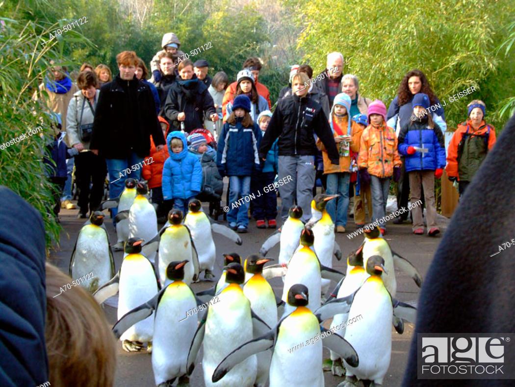 Stock Photo: Penguins at the Zoo. Zurich, Switzerland.