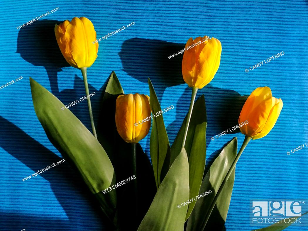 Stock Photo: Four artificial yellow tulips on blue background.