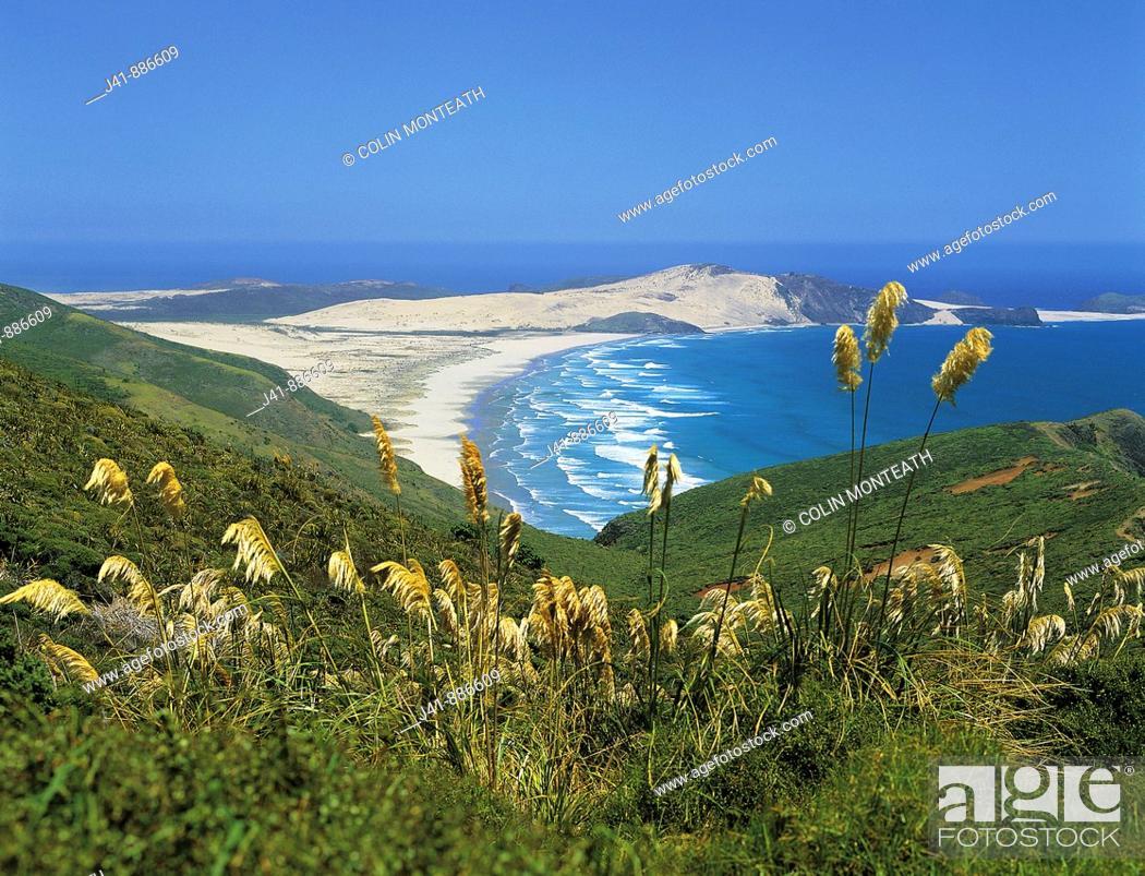 Imagen: Cape Maria Van Diemen Northland New Zealand.