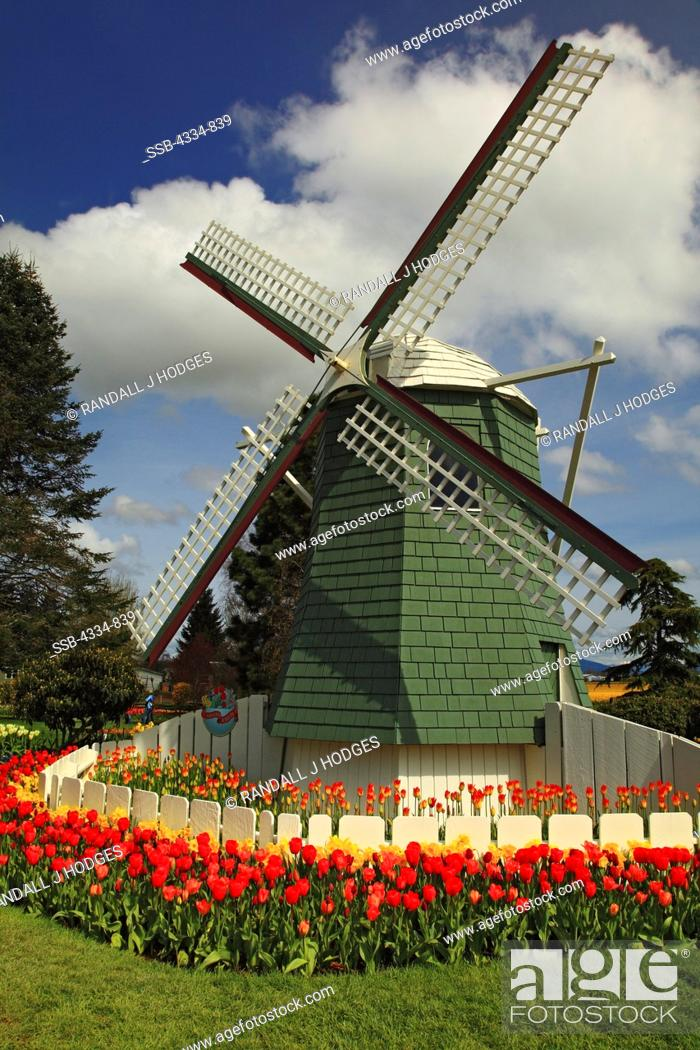 Stock Photo: A Windmill Surrounded by Tulips at Roozengaarde.