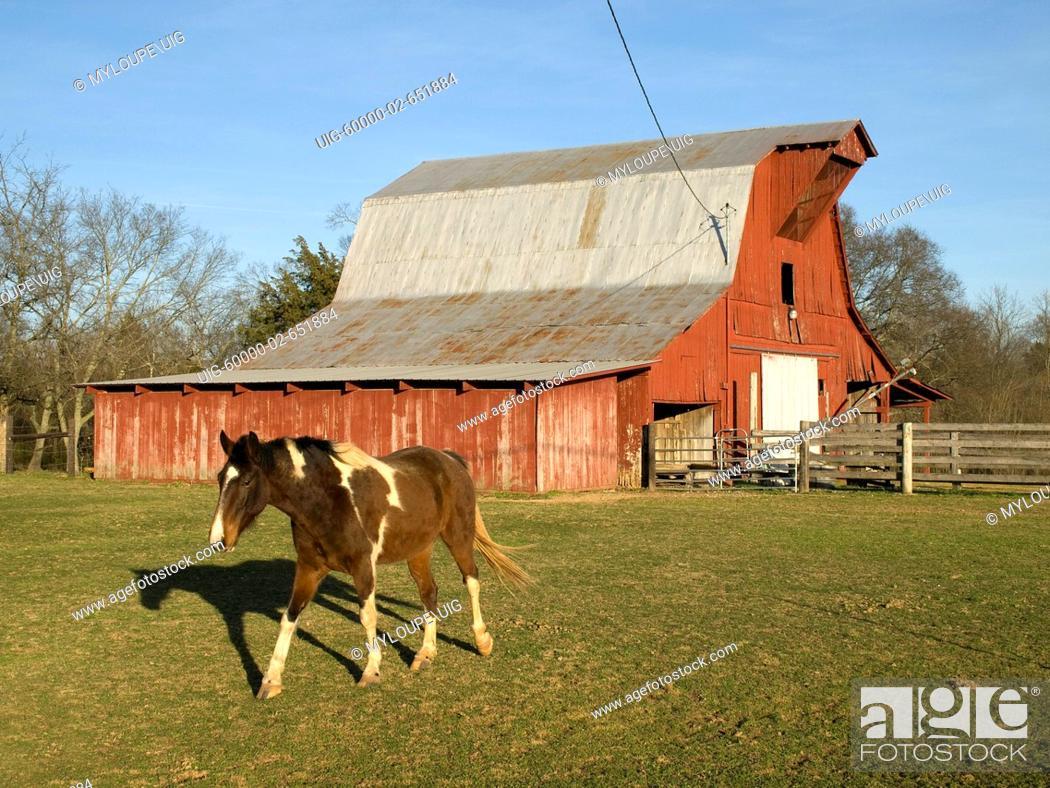 Stock Photo: Red Barn & Horse.