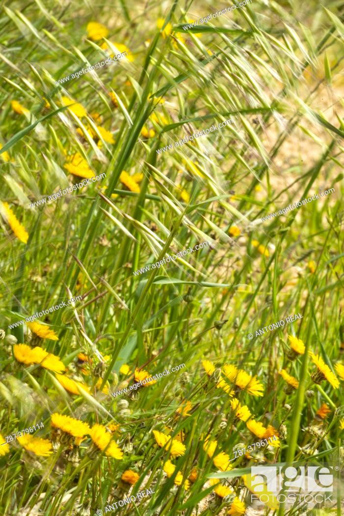 Stock Photo: Field with wild flowers. Almansa. Albacete.