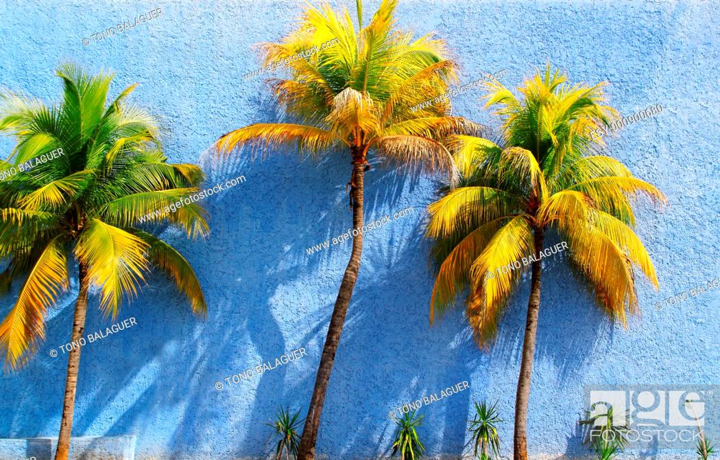 Stock Photo: Coconut palm trees over blue wall sun shadows tropical climate.