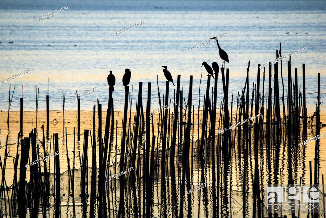 Stock Photo: Albufera Natural Park in the evening, Valencia province, Comunidad Valenciana, Spain.