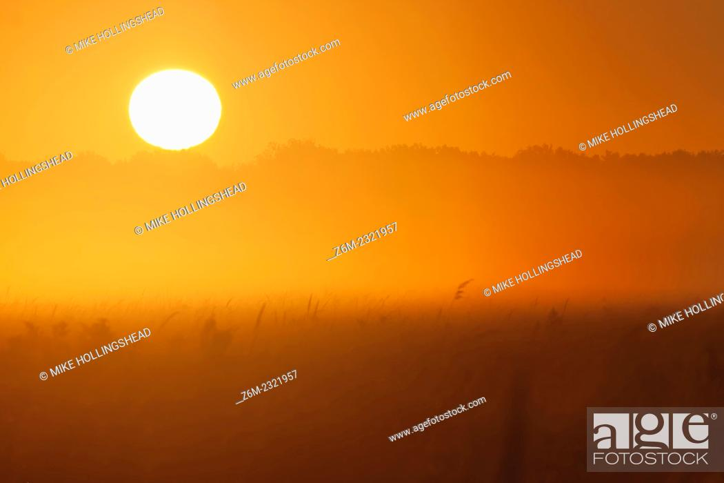Stock Photo: Sun shines through low fog over Desoto Bend National Wildlife Refuge in western Iowa, September 15, 2007.