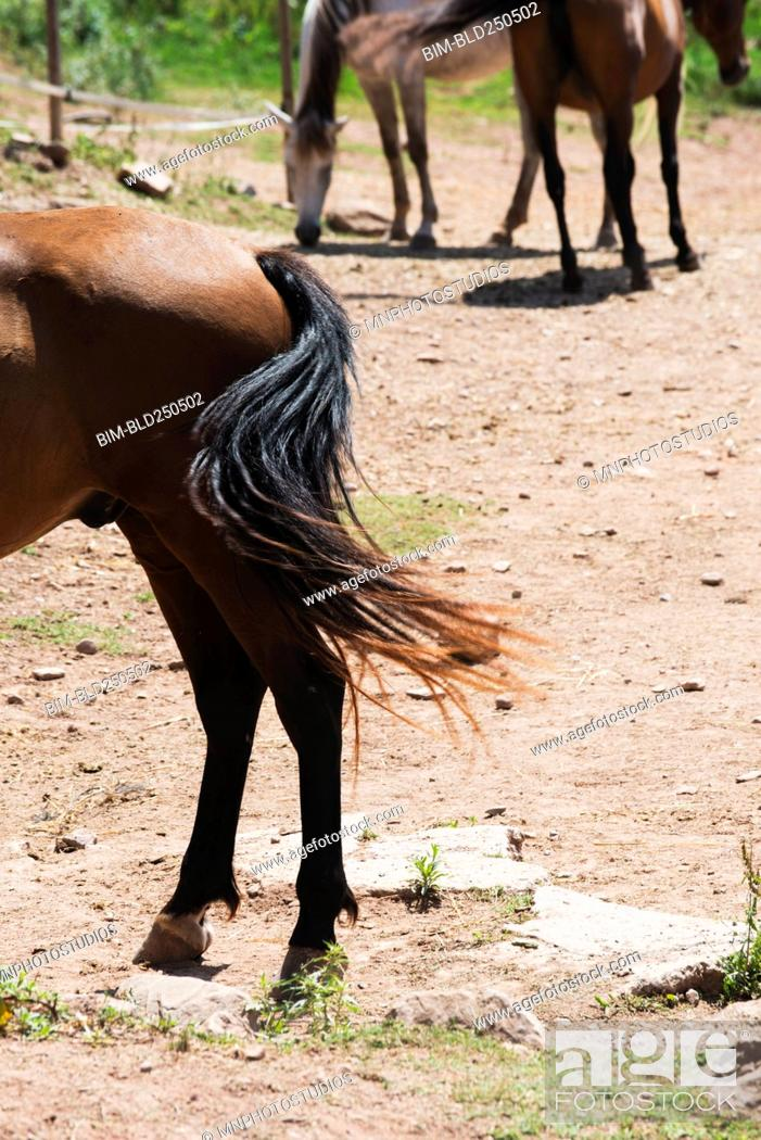 Stock Photo: Horse wagging tail.