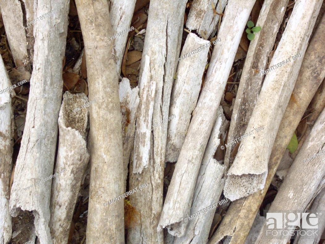 Stock Photo: Bones of victims killed by Khmer Rouge soldiers in Choeung Ek killing field, Cambodia.