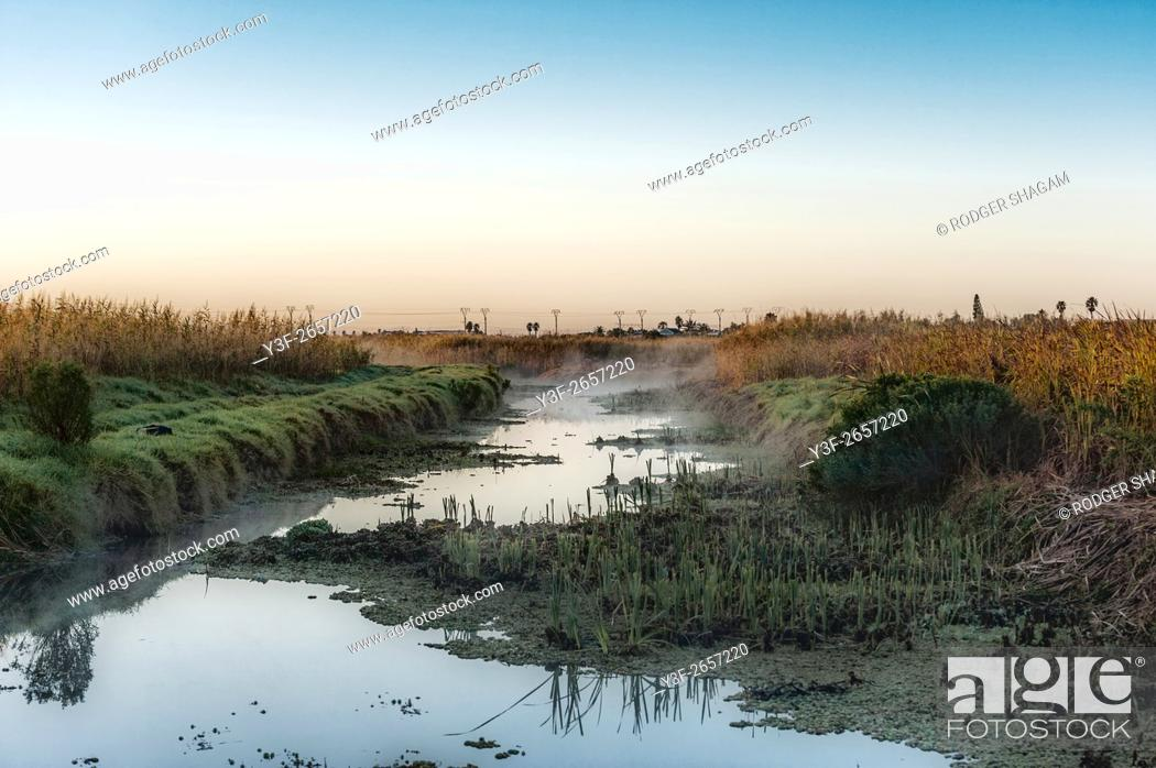 Imagen: Early morning mist rises over a wetland as the tide recedes exposing the reeds and the grassy banks. Lakeside, Cape Town, South Africa.