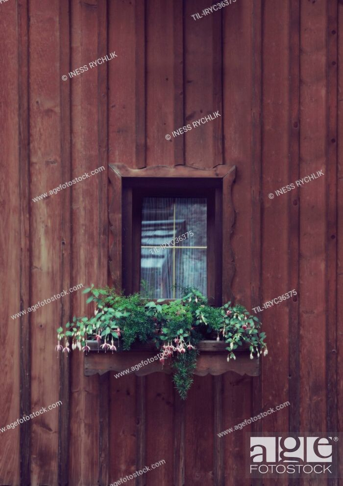 Stock Photo: A small charming window with flowers.