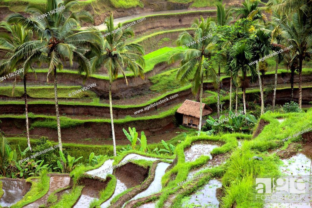 Stock Photo: Bali, Indonesia.