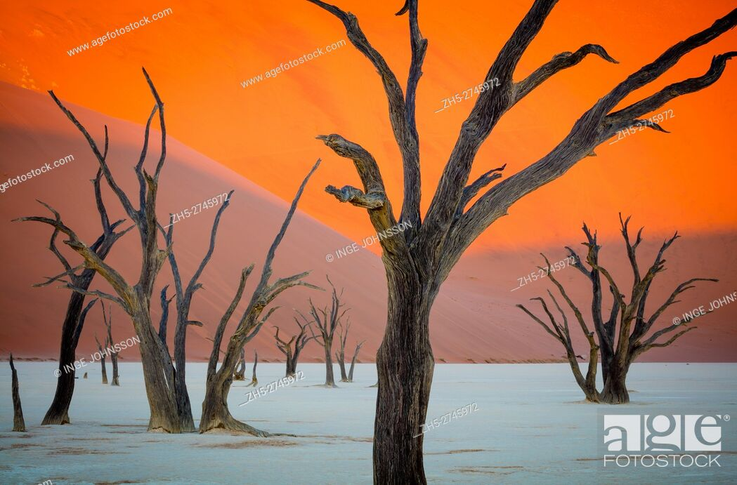 Stock Photo: Deadvlei is a white clay pan located near the more famous salt pan of Sossusvlei, inside the Namib-Naukluft Park in Namibia.