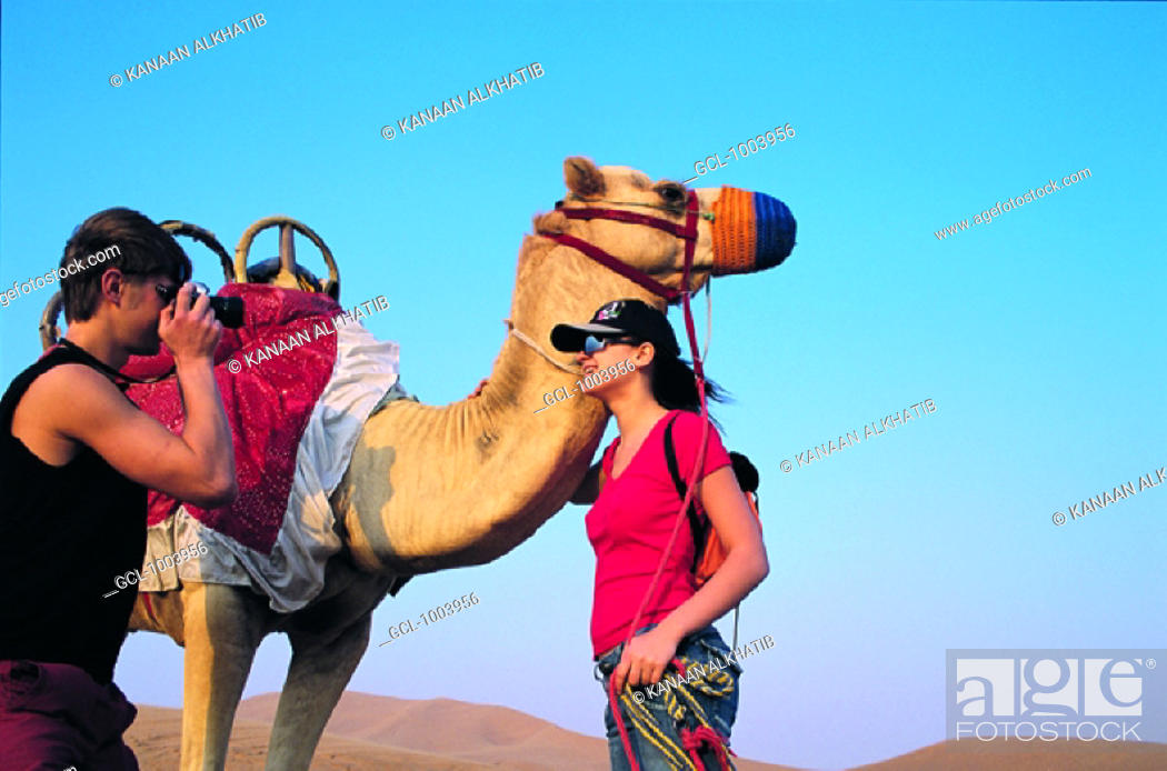 Stock Photo: Western tourists photographing a camel in the desert near Hatta, United Arab Emirates.