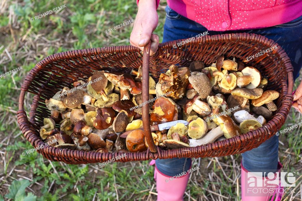 Stock Photo: basket with forest mushrooms from Czech Republic.