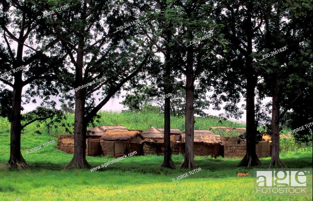 Imagen: Thatched mud huts village compound near Zebilla, Ghana.