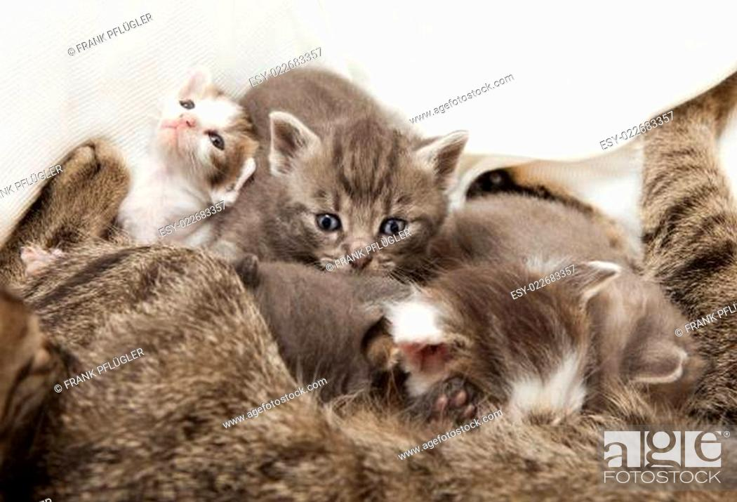 Stock Photo: cats babies suckled.