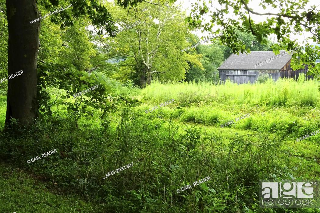 Stock Photo: An old barn appears hidden in the overgrowth, Pennsylvania, USA.