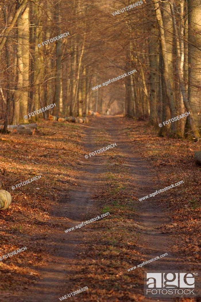Stock Photo: way, path, road, growth, dense, dense growth.