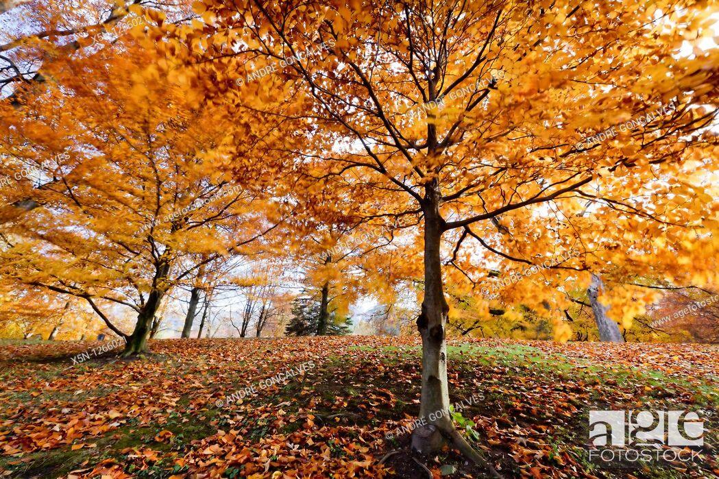 Stock Photo: Forest in Innsbruck, Austria.