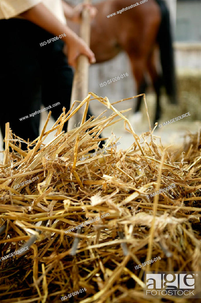 Stock Photo: Person with hay on a pitchfork.