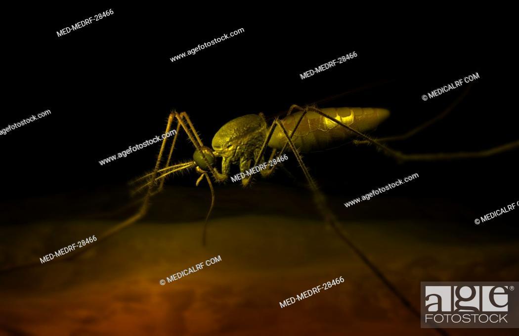 Stock Photo: Mosquito bite.