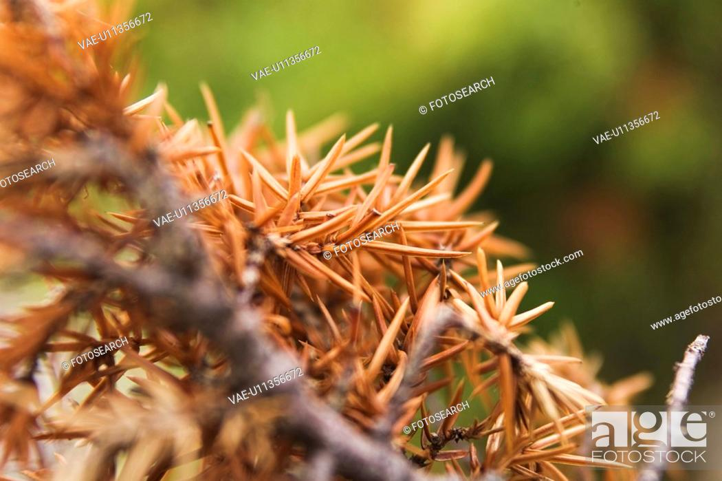 Photo de stock: Blurred, Day, Ferns, Foliage, Garden.