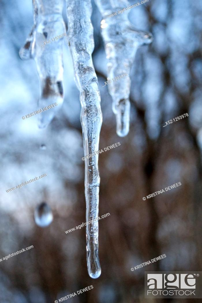 Stock Photo: Some dripping icicles.