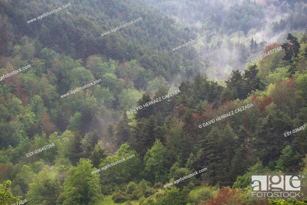 Stock Photo: Autumn misty forest in La Rioja, Spain.