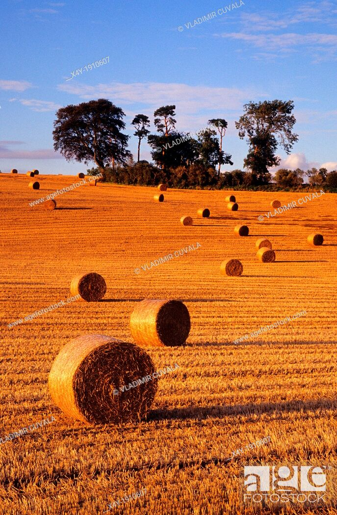 Stock Photo: The hay rolls at the farm field near Daventry during the harvest time, Northamptonshire, United Kingdom.