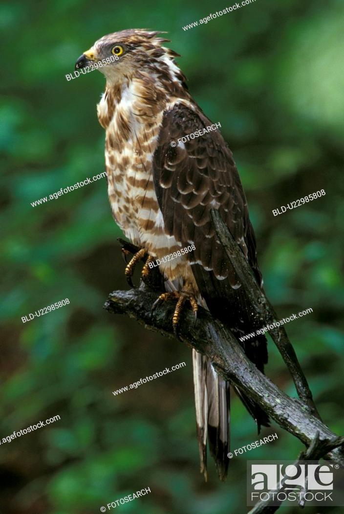 Stock Photo: federn, animals, aves, beak.