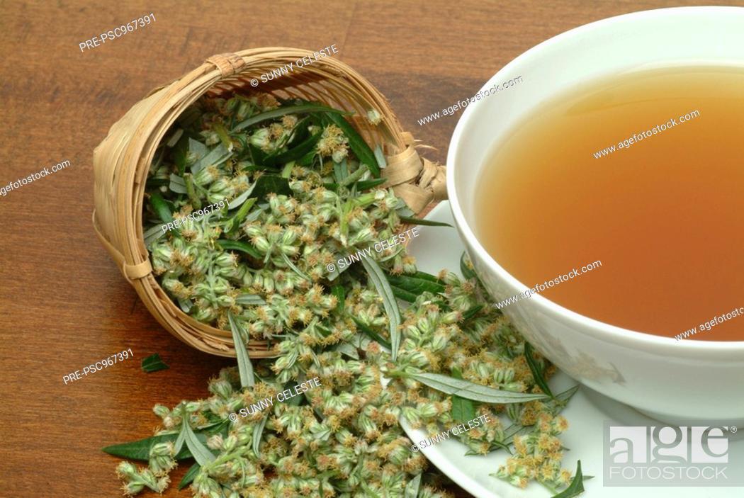 Medicinal herb-tea and Blossom of the medicinal plant