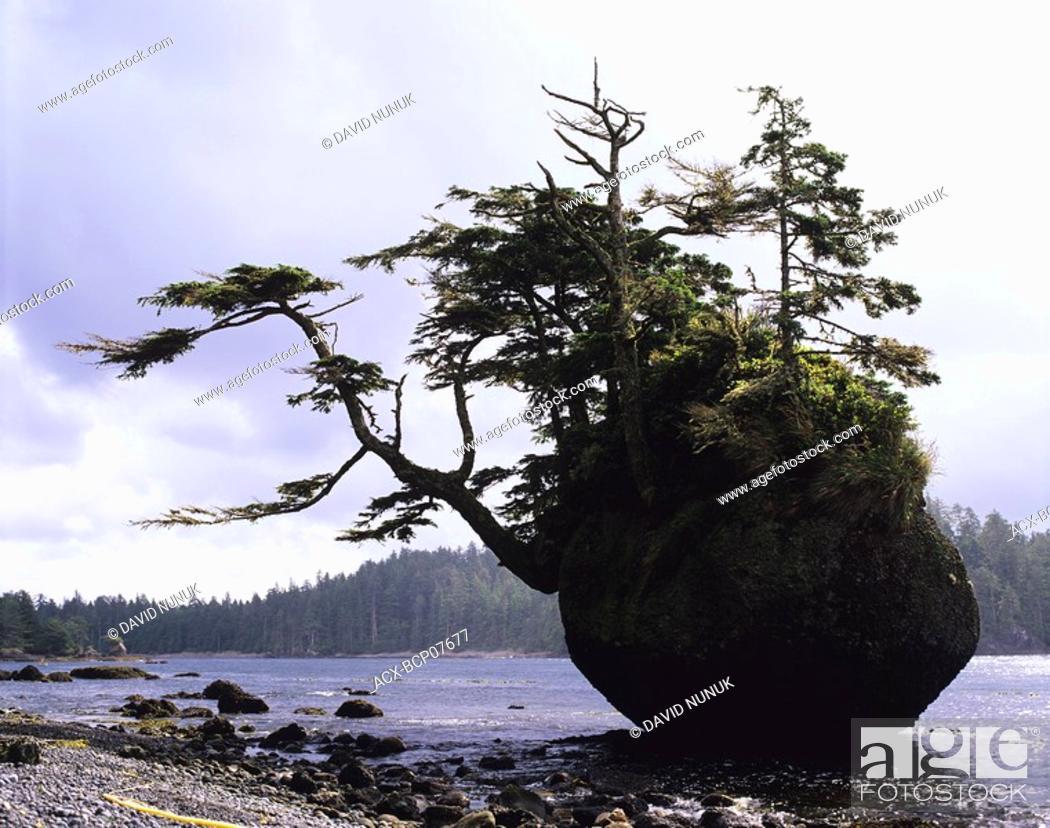 Stock Photo: Testlatlints rock or Flower pot Rock, Langara Island, Haida Gwaii, British Columbia, Canada.
