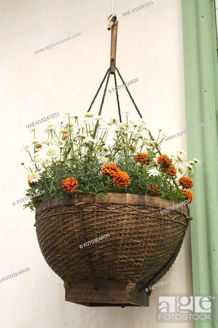 Stock Photo: Day, Blossom.