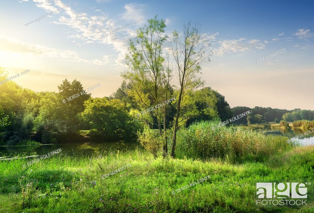 Stock Photo: Trees on a green meadow near calm backwater.