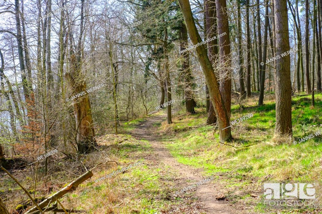 Stock Photo: Woods near Bad Liebenberg in the German state of Brandenburg in early spring.