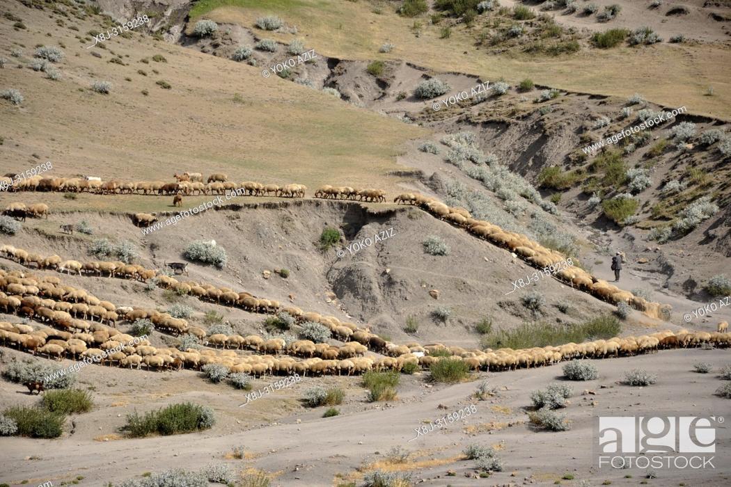 Stock Photo: Azerbaijan, Khimalig village, flock.